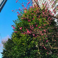 うめ。東京には春が.jpg
