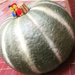 ぐりとぐら かぼちゃ.jpg