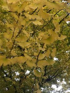 もりのみやこは秋 その2.jpg