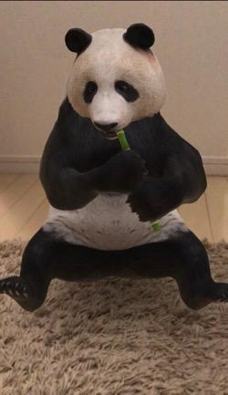 パンダ!!! (1).jpg