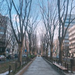 冬の定禅寺通り。.jpg