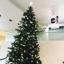 天文台のクリスマスツリー (1).jpg