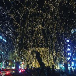定禅寺通り2016.jpg