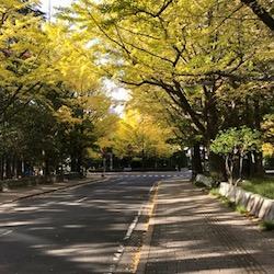 県庁前のイチョウ2020 (1).jpg