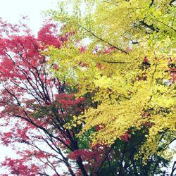 秋があってよかったというモンゴメリ。.jpg