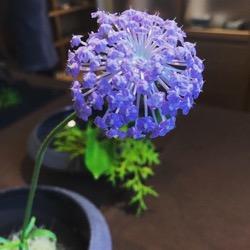 紫❌花器 (1).jpg