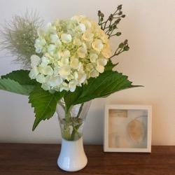 紫陽花白い花瓶に。 (1).jpg