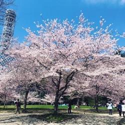 錦町公園入り口 (1).jpg