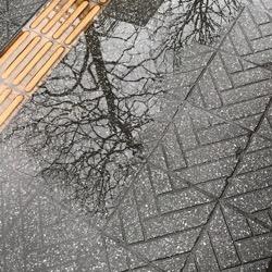 雪の朝から2020 (1).jpg