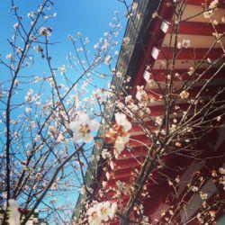 鹿島御児神社.jpg
