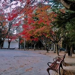 1012勾当台公園 赤いもみじ (1).jpg