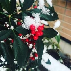 12月9日雪の朝 (1).jpg