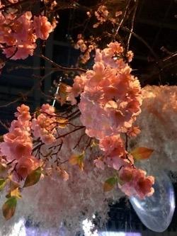 20180207花 さくら (1).jpg