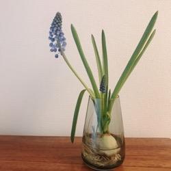 bigsmile flower (1).jpg