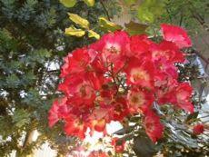 flower%20honcho.jpg