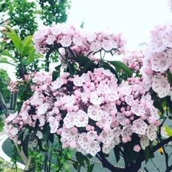 pink hana 2018 may (1).jpg
